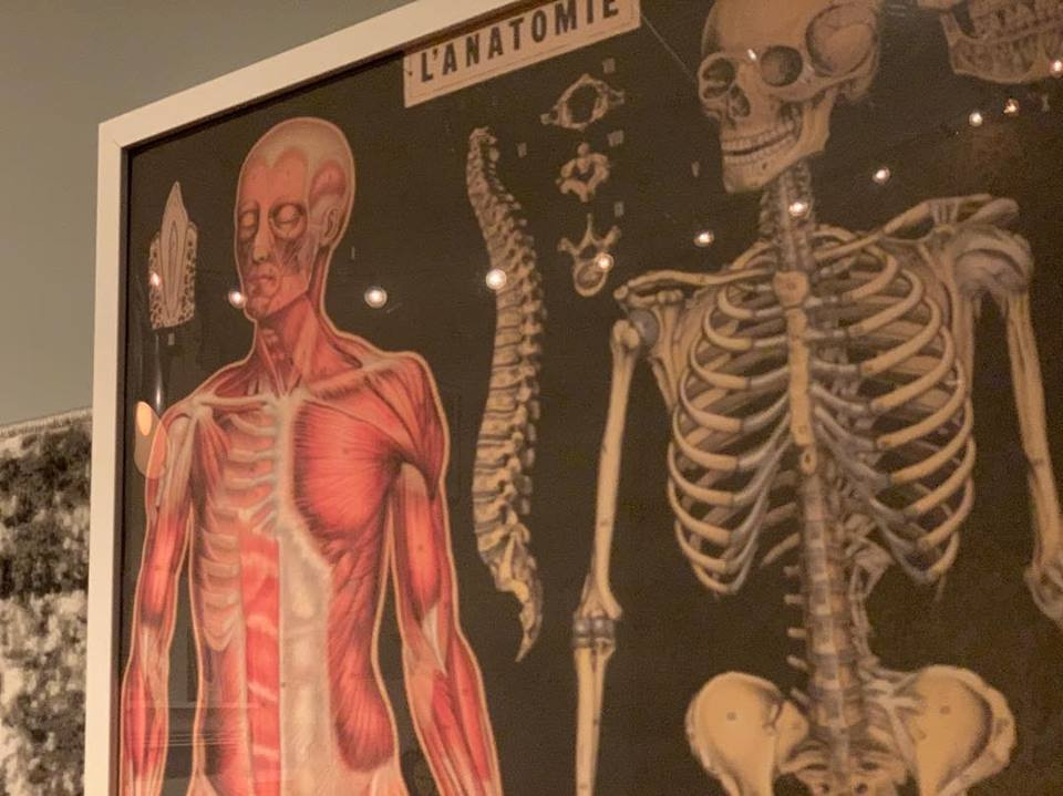 A framed poster of the human anaomy in the massage studio.