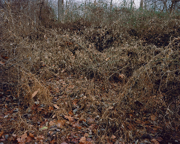 overgrowth2.jpg