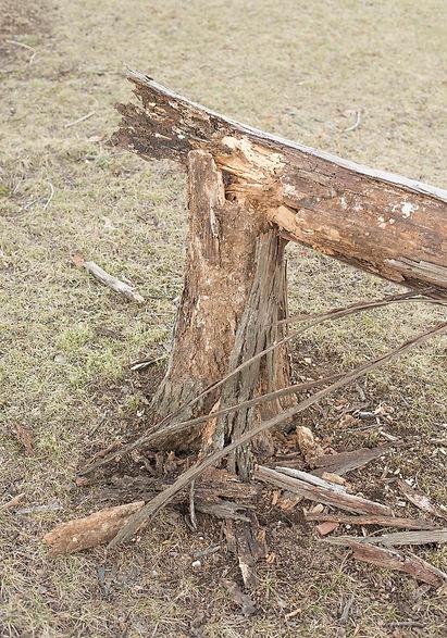 fallen tree (2 of 1).jpg