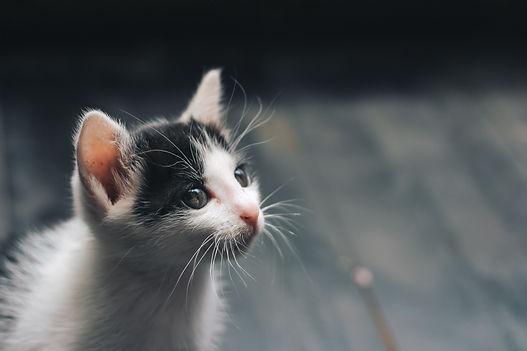 adorable-animal-baby-1120049.jpg