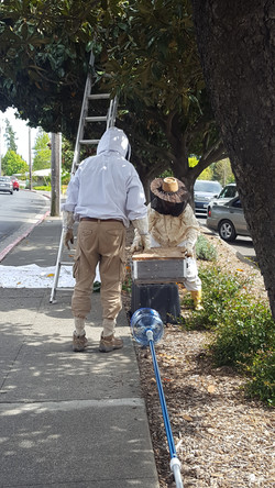 Beekeepers saving the day!