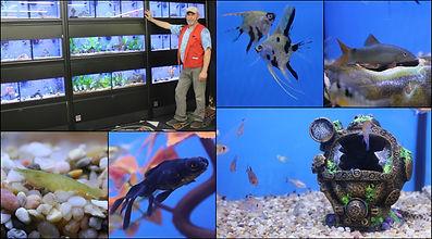 Fish and aquarium supplies