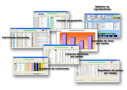 Software Porcino: informes