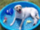 DogsEnjoyingSummer_Dog_in_pool.jpg