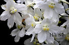 White Crepe Orchids WM.jpg