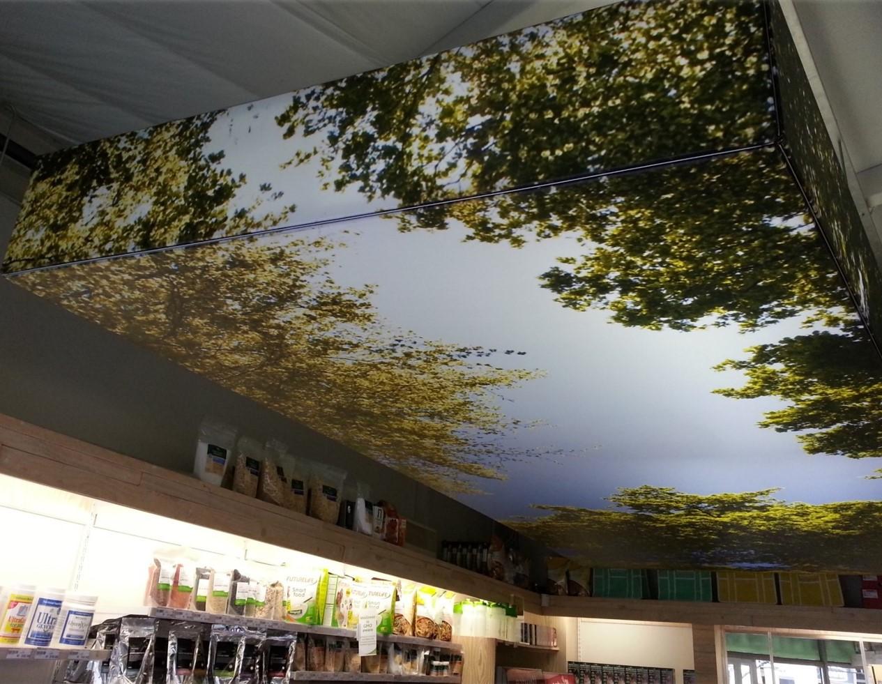 Flash ceiling bulkhead