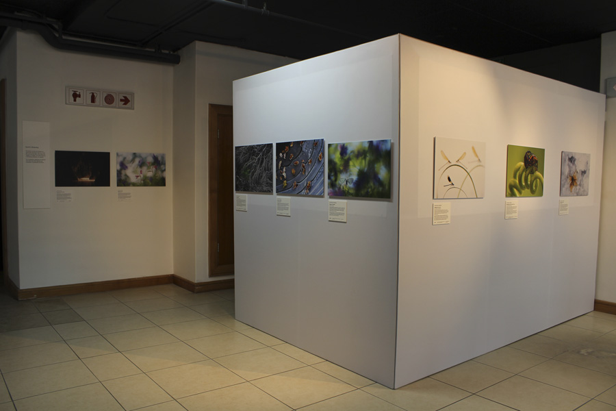 Exhibition walls