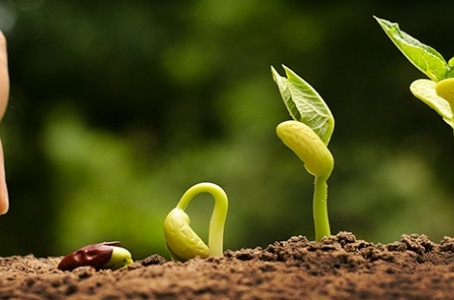 Préparer la terre (notre esprit) à recevoir la semence