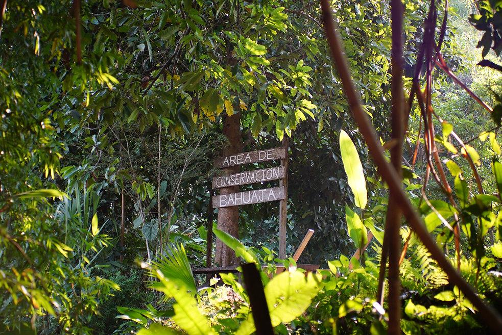 Área de Conservación Bahuaja