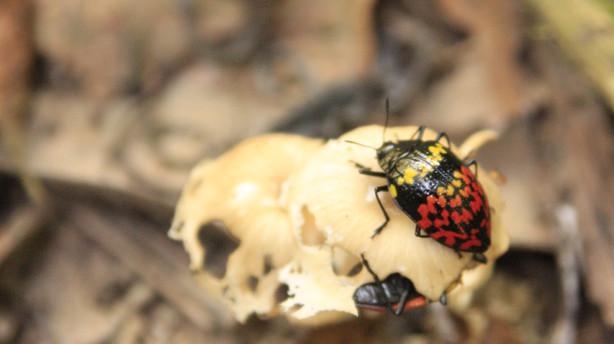 Insectos en la naturaleza