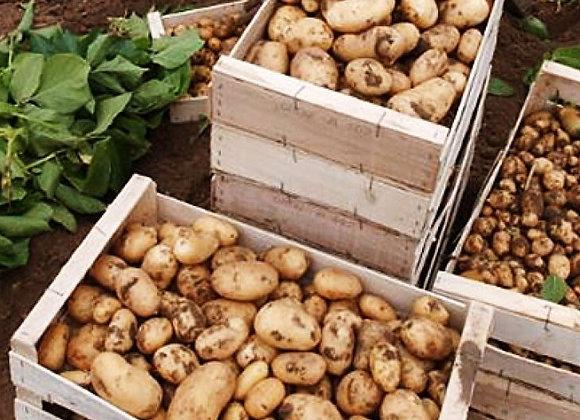 Pommes de terre/aardappelen 2kg