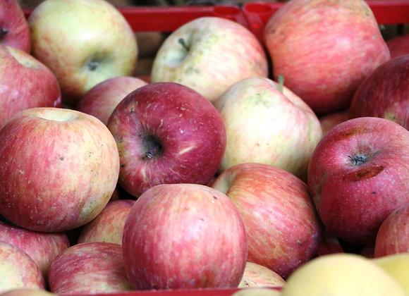 Pomme/appel jonagold 500g