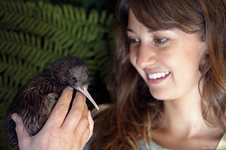 Kiwivogel