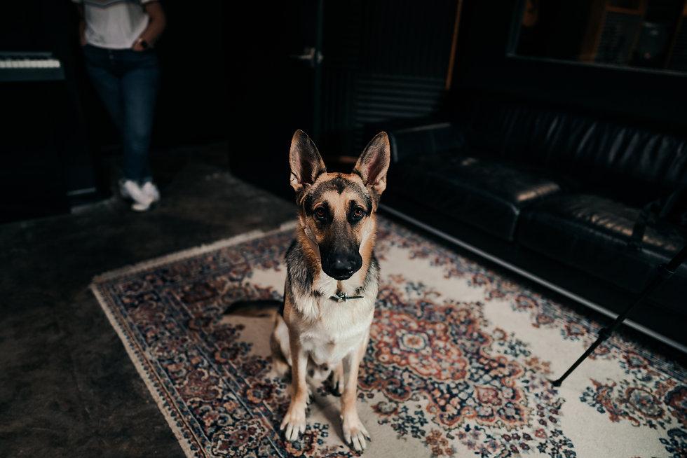 Charlie, Studio Pup