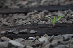 Growth on Track
