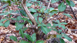 Plants on Sugarloaf
