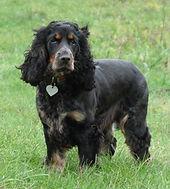 dog grooming crowborough