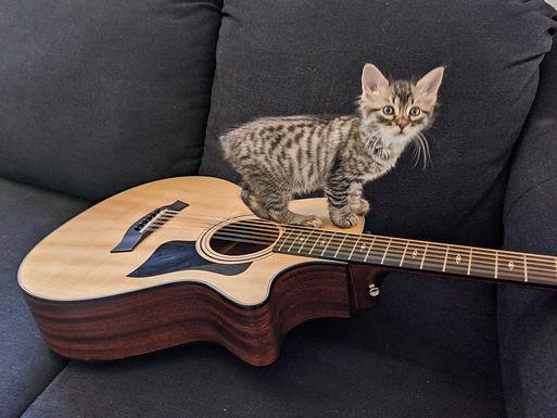 kitten guitar.jpg