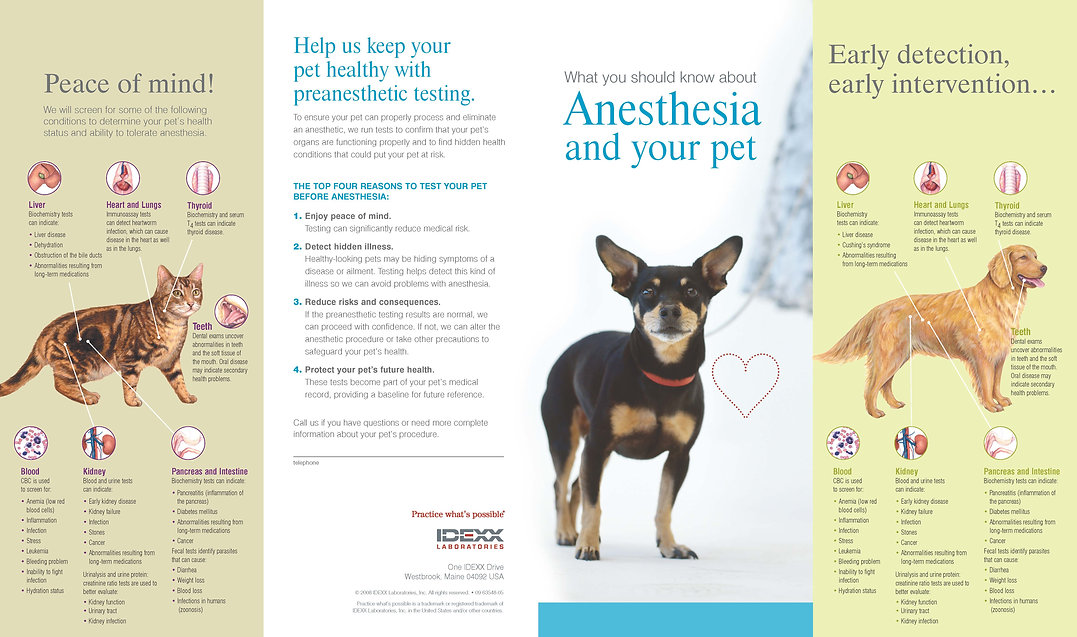 preanesthetic client brochure IDEXX_Page