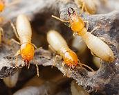 Diagnotic termite Ajaccio Corse