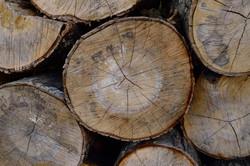 Rare Timber To Order