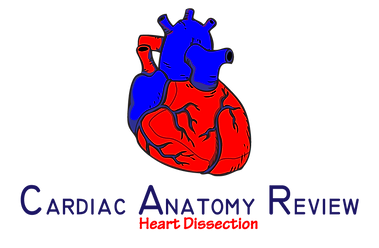 CardiacAnatomyReviews1.png
