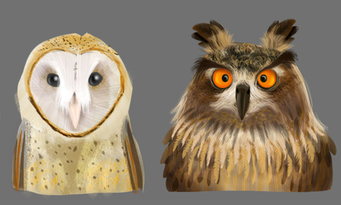 Owl Head Studies