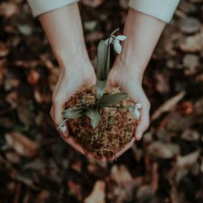 6 Ways to Create an Eco-Friendly Garden