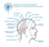 HEAD-MAP-1.jpg