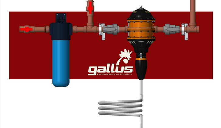 Gallus.-.png