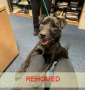 Edward (rehomed)
