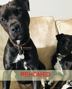 Chas & Dave (rehomed)