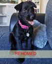 Lucy (rehomed)