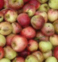 apples (2).jpg