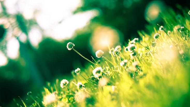 Nature-Spring-032.jpg