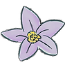 webflower violet.png