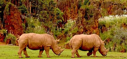 Rinocerontes%20en%20el%20Cab%C3%A1rceno.