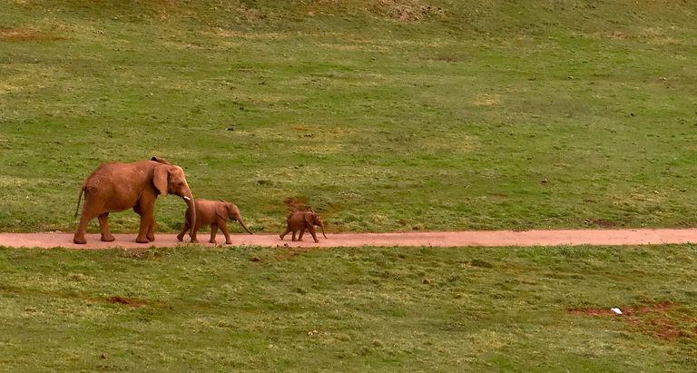 Viaje en grupo para familias de lesbianas al safari de Cabárceno en Cantabria