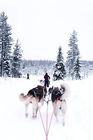 Bolleras viajeras - viaje en grupo en familia a Laponia (Finlandia).Turismo para mujeres lesbianas, bisexuales, transexuales, LGTBIQA+ y mujeres lesbian friendly. Viaja en con tus hijos e hijas, viajar con niños y peques.