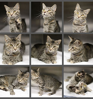 kitty foto.jpg