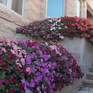 Saul's gardens 018.jpg