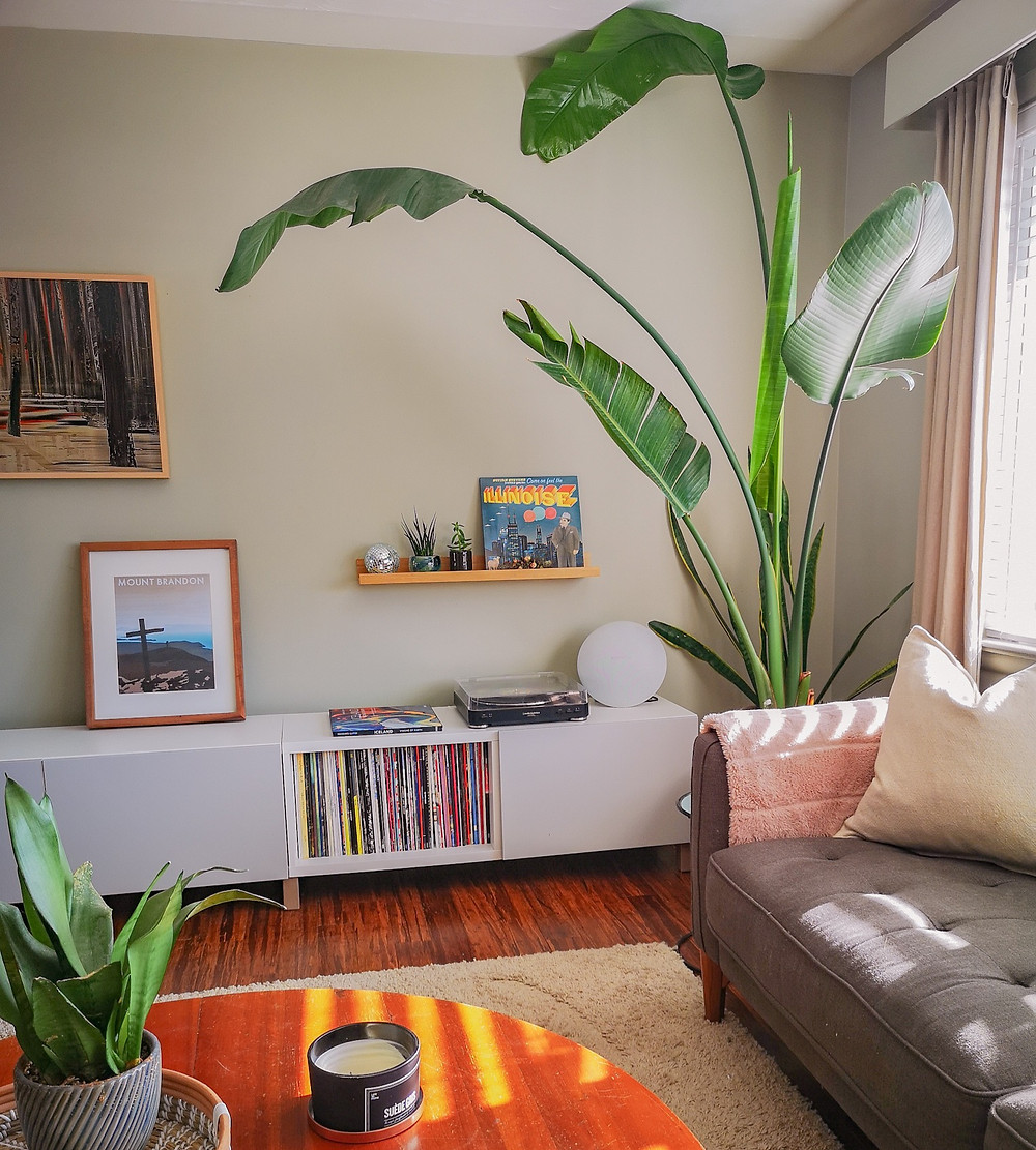 music, living room decor, vinyl, record player, samsung frame tv, long low cabinet, bird of paradise, indoor plants, tropical plants, linen curtains, vintage modern, modern boho, organic modern, vintage finds, picture ledge,