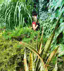 jungalow front garden women in garden plant lover