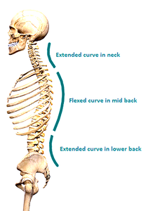 Spinal Curvature