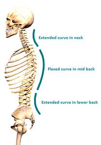 Spinal Curvature