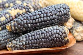 Maíz azul criollo orgánico para consumo humano cosechado en México