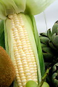 suppliers of mexican food grade white corn, distributers of food grade corn mexico