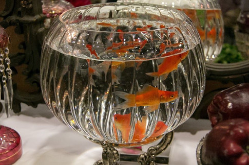 Goldfish ,Haftseen table at Colorado Children's Noruz Program CCNF 2017 program at infinity park event center