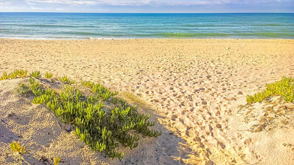 Ilha Deserta Barreta beach Algarve Portugal