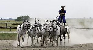 puszta-horse-show-in-lajosmizse-01.jpg